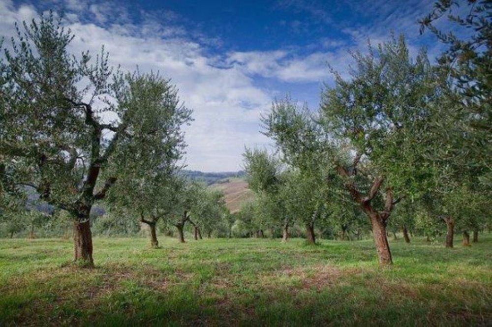 L'olio extravergine d'oliva della val d'Orcia Concediti la massima qualità!